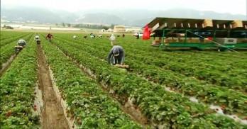 Trung Quốc dùng công nghệ AI giảm thiệt hại trong sản xuất nông nghiệp