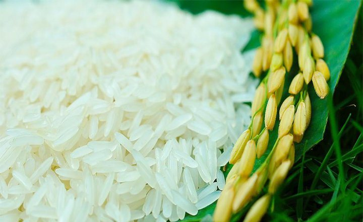 Gạo Nàng Thơm vùng đất Chợ Đào, huyện Cần Đước (Ảnh Internet)