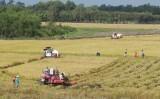 Đức Huệ: Phát triển vùng sản xuất chuyên canh cây chanh, lúa chất lượng cao