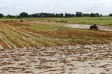Vệ sinh đồng ruộng để sản xuất vụ Đông Xuân 2020-2021 hiệu quả