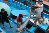 EVFTA: Cơ hội thúc đẩy phục hồi xuất khẩu sản phẩm tôm, cá ngừ vào EU