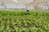 Cần Giuộc: Hỗ trợ phụ nữ vay vốn trồng rau ứng dụng công nghệ cao