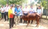 Nguyên Chủ tịch nước - Trương Tấn Sang trao bò giống cho hộ nghèo huyện Đức Huệ