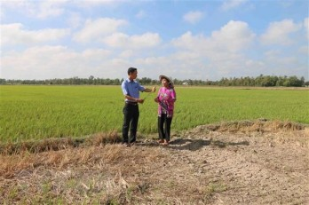 Drought, saltwater intrusion cause big losses to Tra Vinh