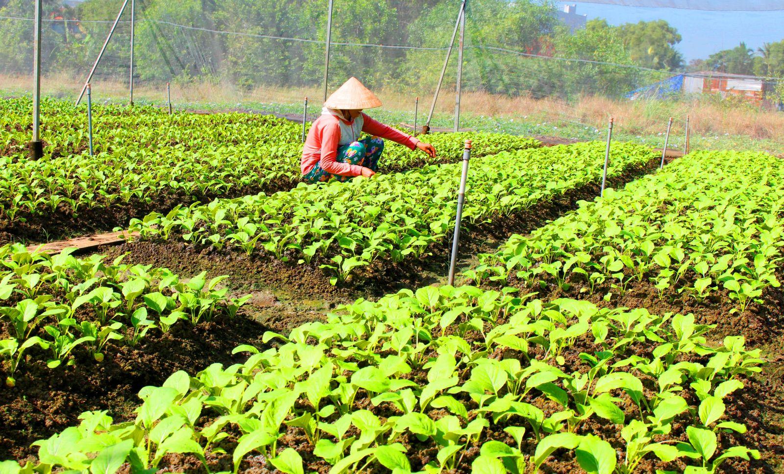 Địa phương chú trọng phát triển kinh tế để giảm nghèo