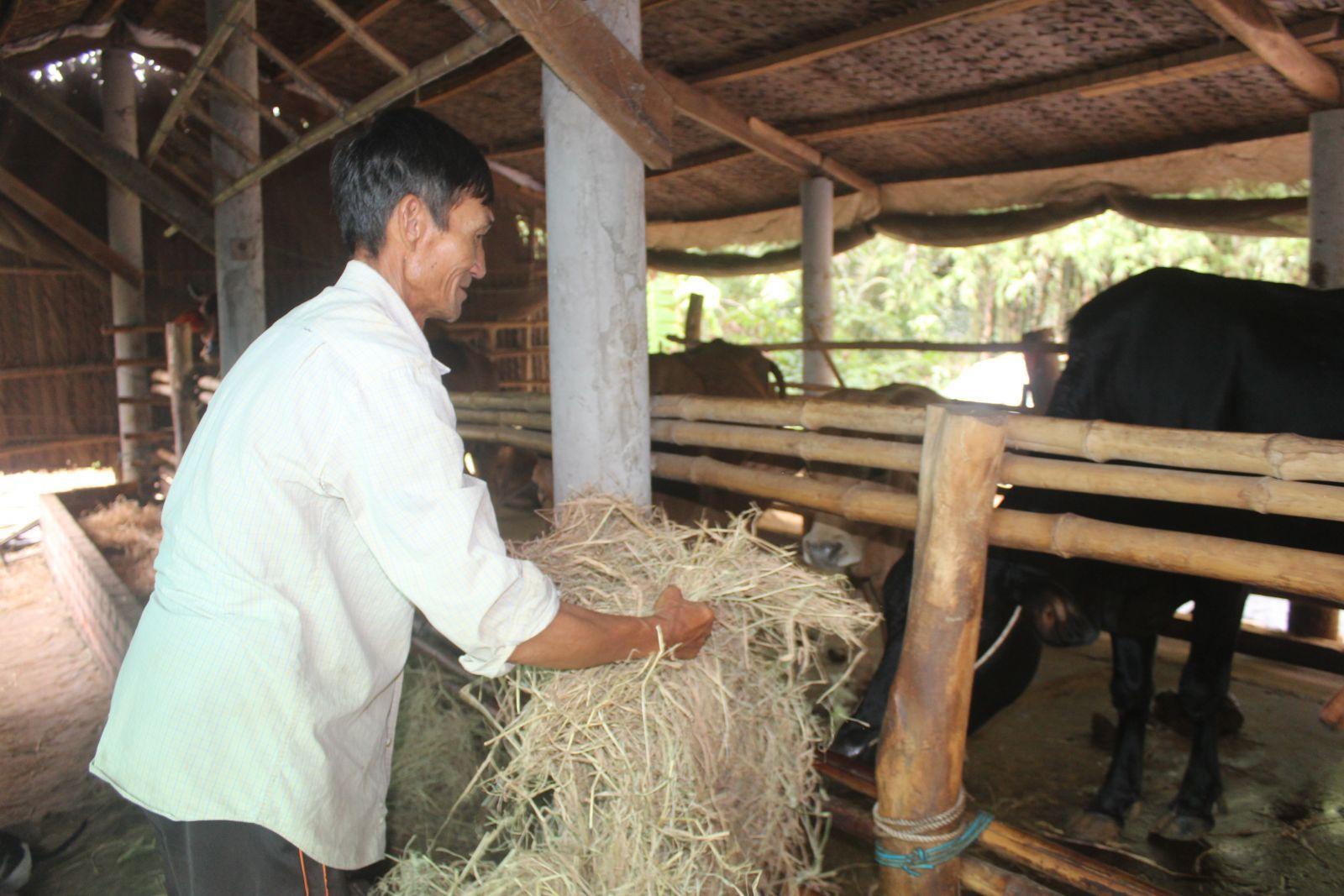 Ngoài hỗ trợ vay học sinh, sinh viên, ông Huỳnh Văn Mức còn được vay vốn chăn nuôi bò