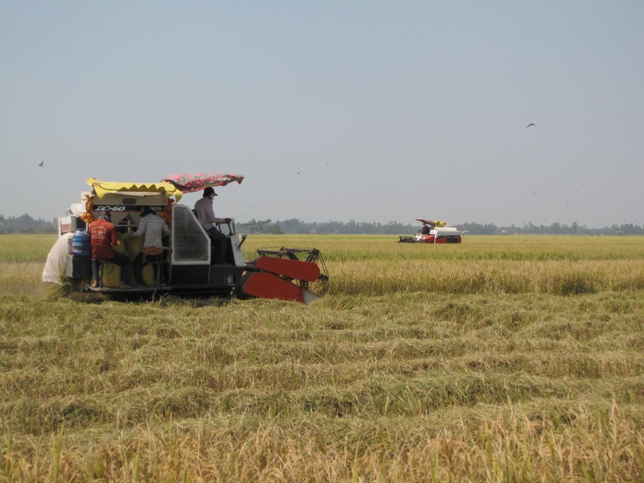 Huyện Đức Huệ đẩy mạnh xây dựng vùng lúa chất lượng cao