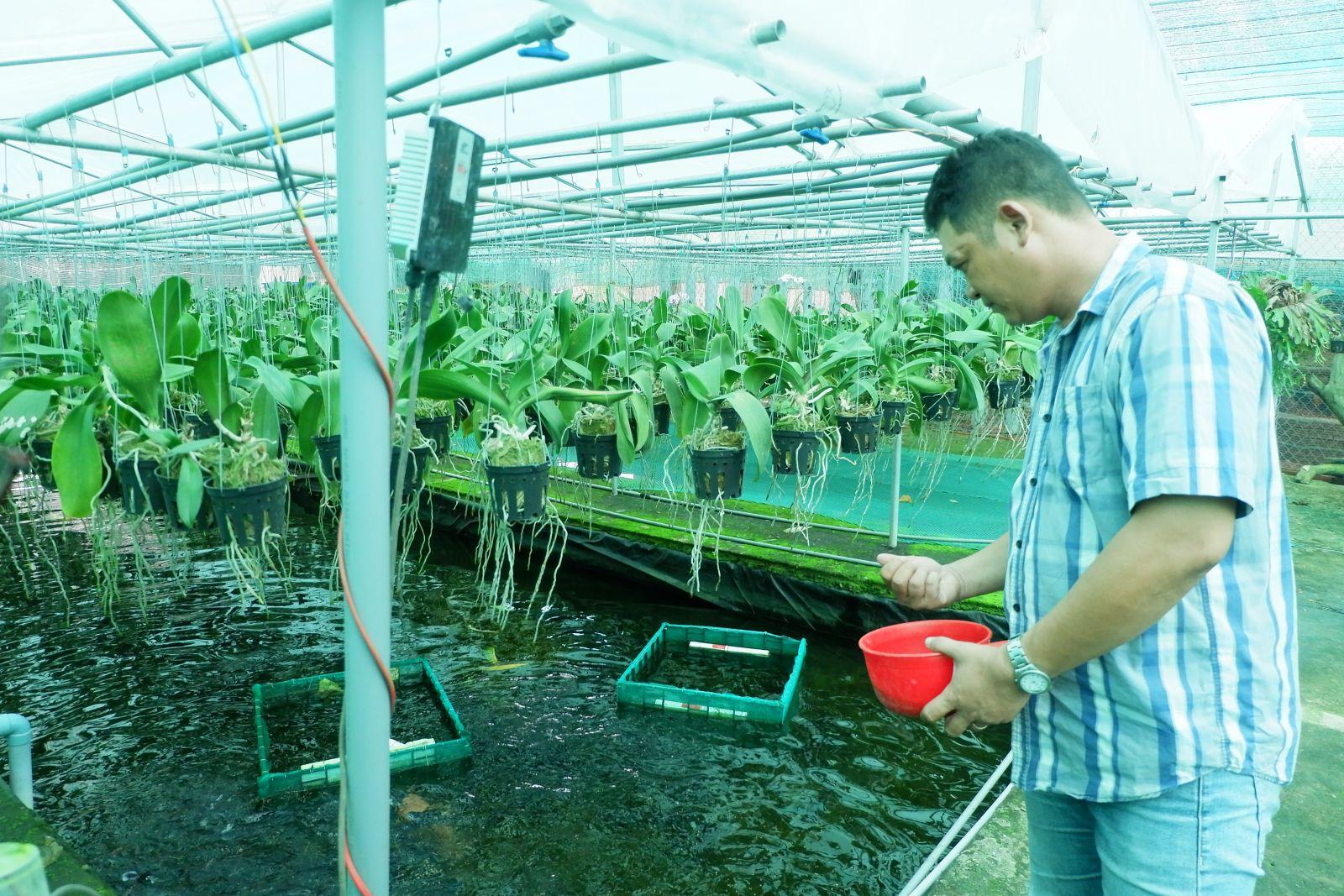 Anh Phạm Hoàng Hậu kết hợp nuôi cá tạo nguồn nước dinh dưỡng cho lan