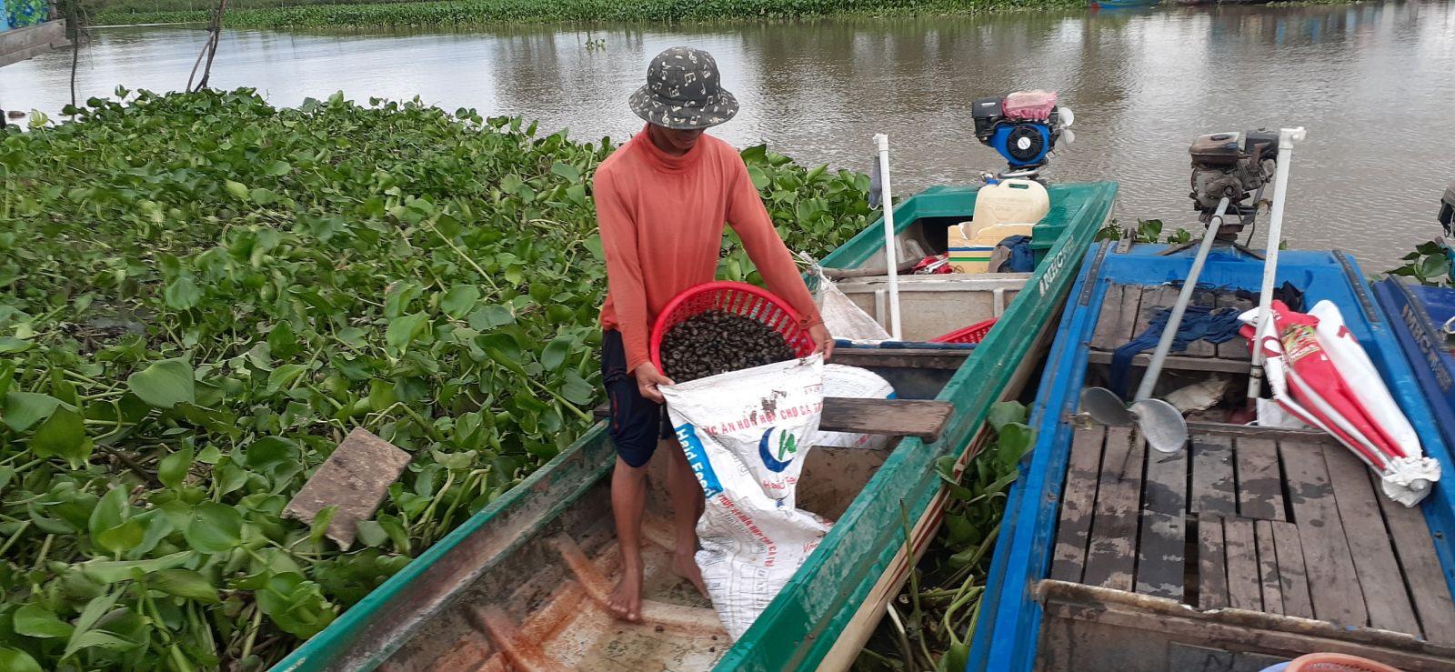 Bắt ốc đắng giải quyết việc làm cho nhiều lao động nhàn rỗi ở nông thôn trong mùa lũ