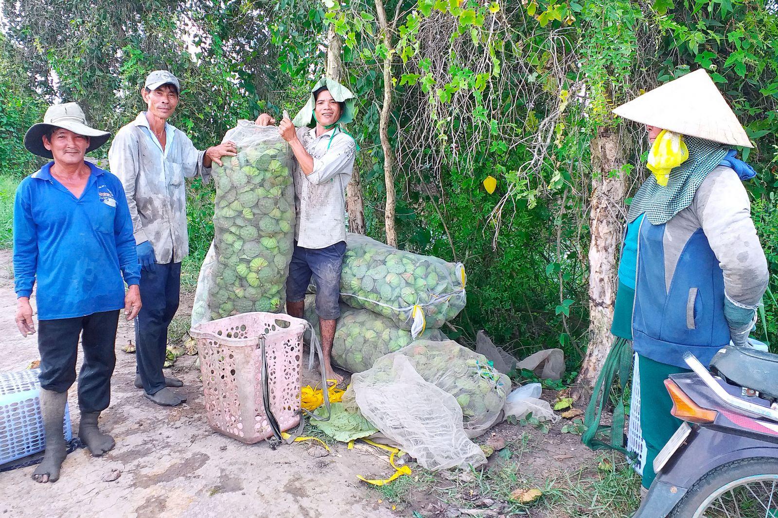 Gương sen được bán với giá, 20.000 - 30.000 đồng/kg
