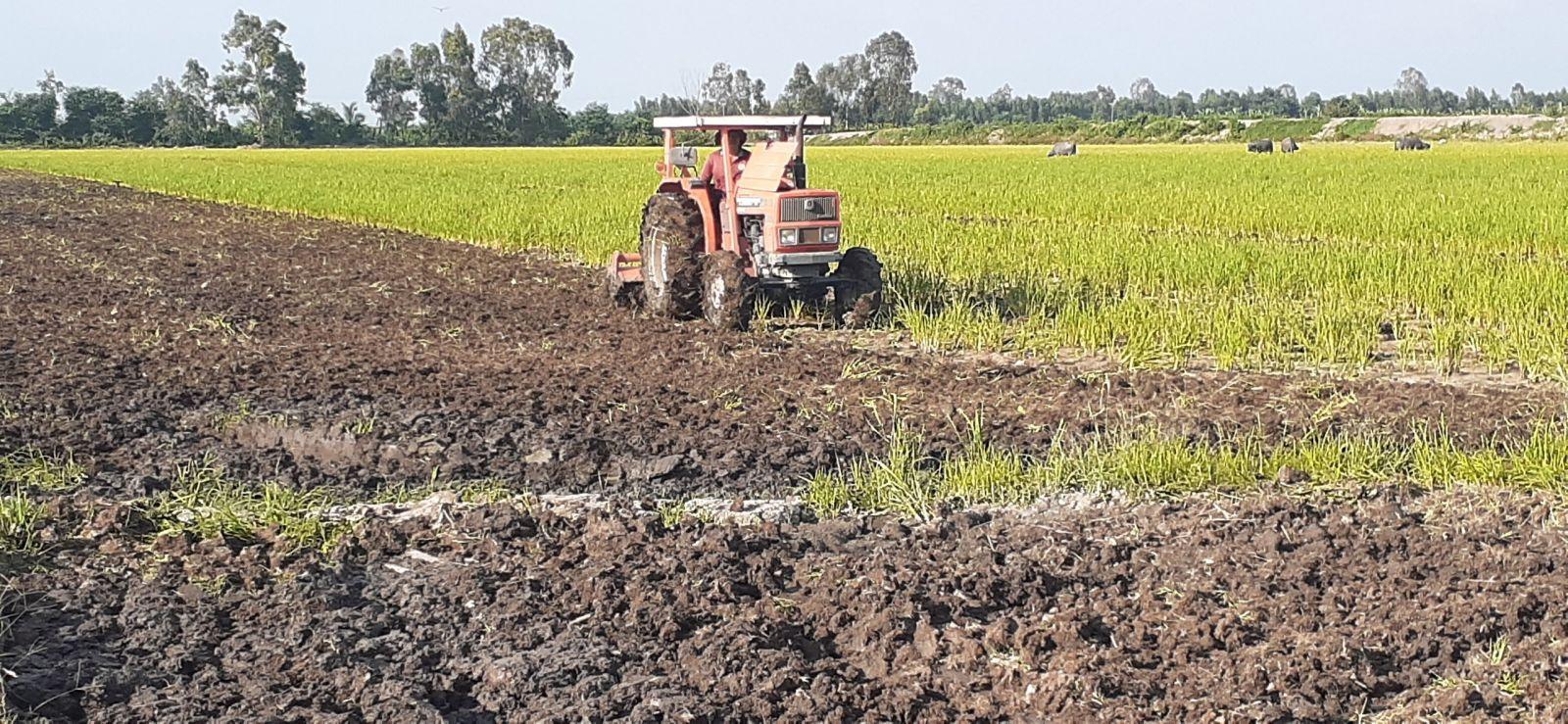 Nông dân Tân Hưng khẩn trương cày, xới đất ngâm lũ