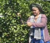 Chuyển đổi cây trồng mang lại hiệu quả kinh tế