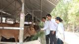 Quỹ Hỗ trợ nông dân huyện Đức Hòa: Giúp hội viên vươn lên thoát nghèo