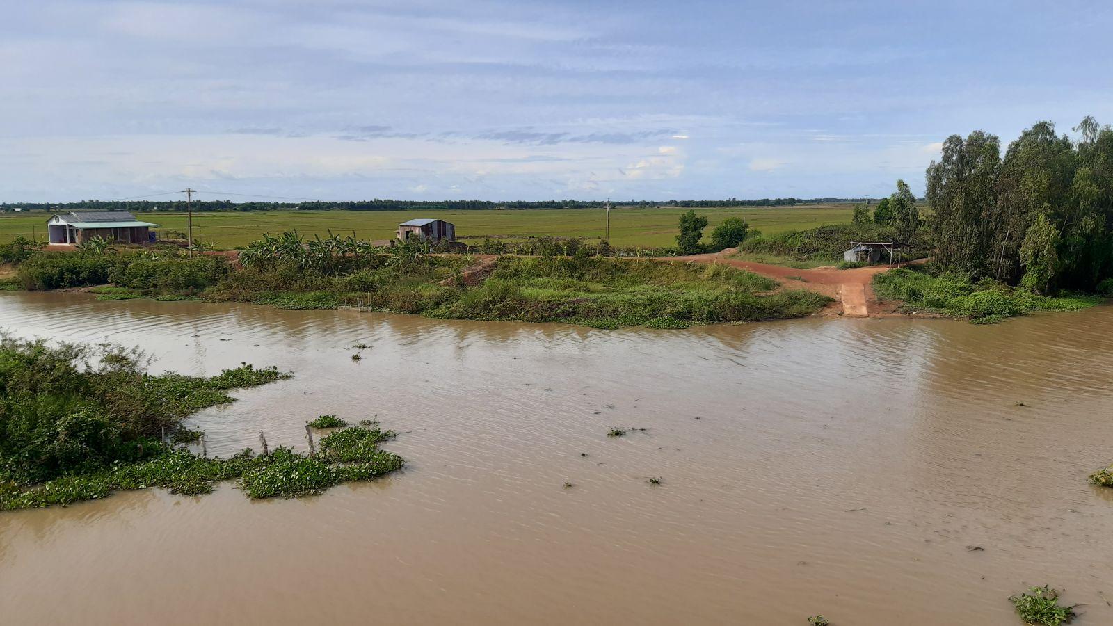 Hầu hết những cánh đồng nước lũ chưa ngập đến