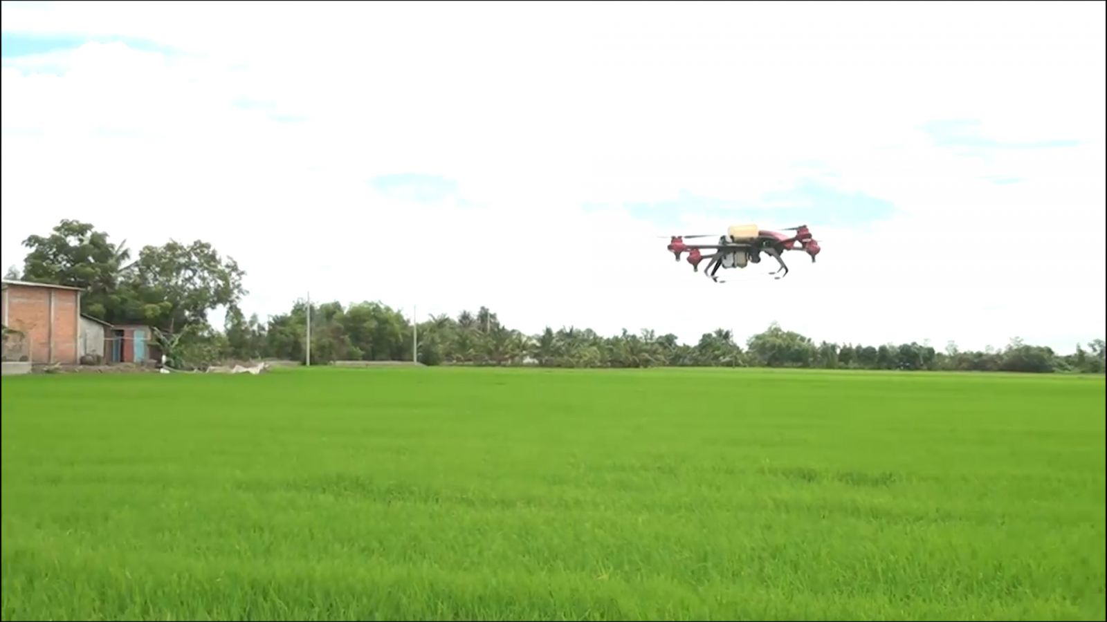Unmanned aircraft is used to spray insecticide in the farming fields