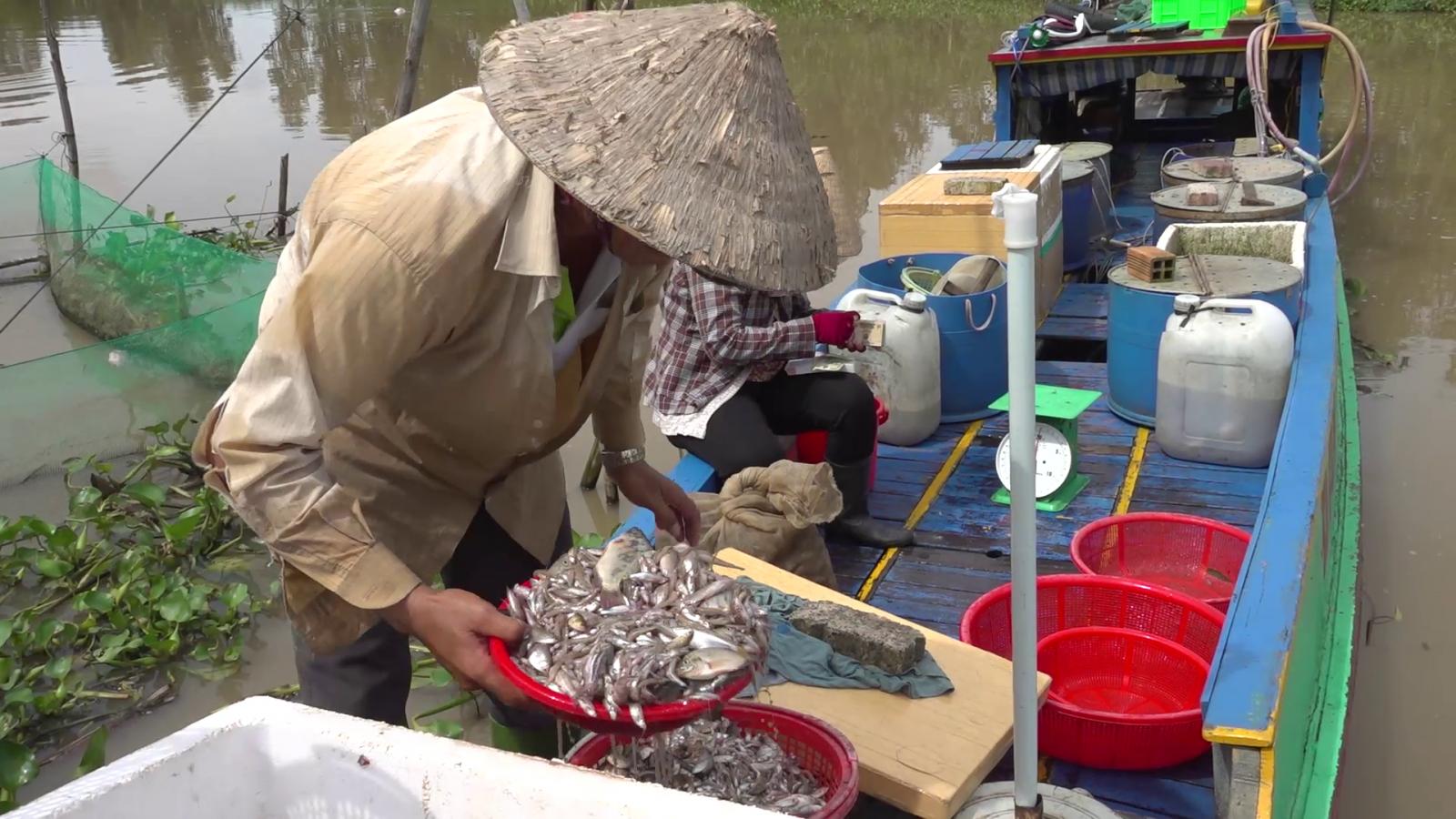 Mưu sinh bằng nghề đánh bắt cá mang lại thu nhập ổn định cho nhiều gia đình trong mùa lũ