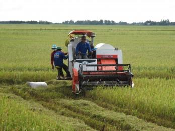 Hướng sản xuất tăng năng suất, lợi nhuận cho người trồng lúa