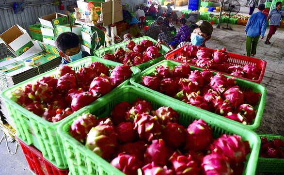 EVFTA helps boost Vietnam's agricultural exports to EU  (Photo: tuoitre.vn)
