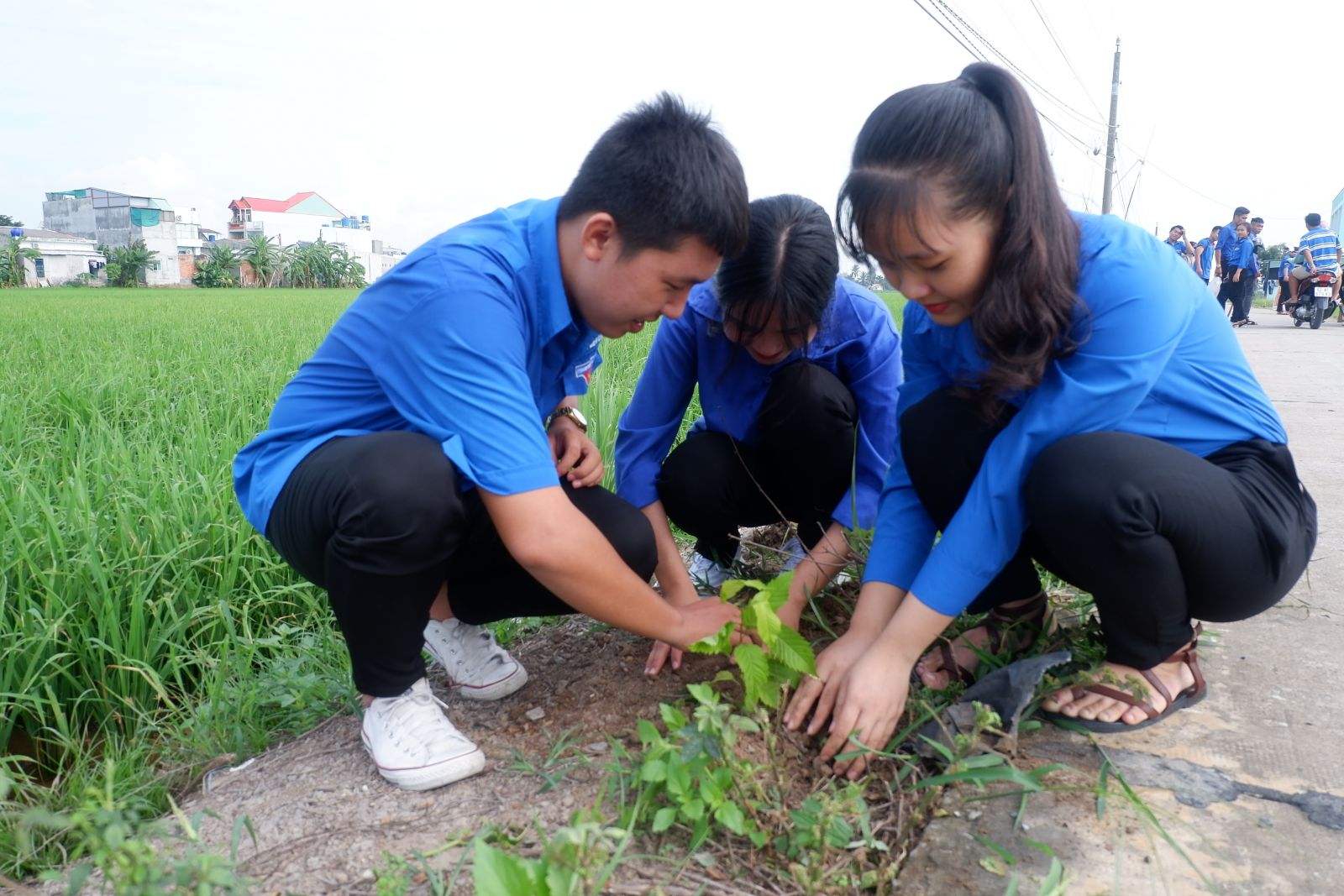 Hưởng ứng Ngày Chủ nhật xanh, tuổi trẻ Bến Lức tham gia trồng cây trên các tuyến đường nông thôn