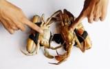 Bí quyết chọn cua biển chắc thịt, gạch đặc béo ngậy