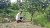 Bước tiến mới trong chuyển dịch cơ cấu cây trồng
