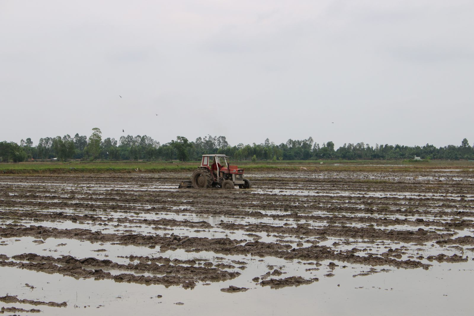 Farmers need to be proactive in sowing rice for Winter-Spring crop 2020 – 2021