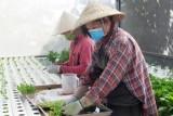 Liên kết sản xuất góp phần nâng cao giá trị và tạo đầu ra cho nông sản