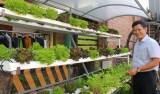 Lợi ích từ việc trồng rau sạch tại nhà
