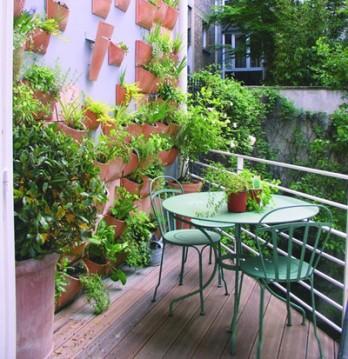 Những khu vườn nho nhỏ trên ban công