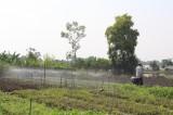 Hợp tác xã Rau an toàn Mười Hai: Ứng dụng công nghệ cao trong sản xuất rau