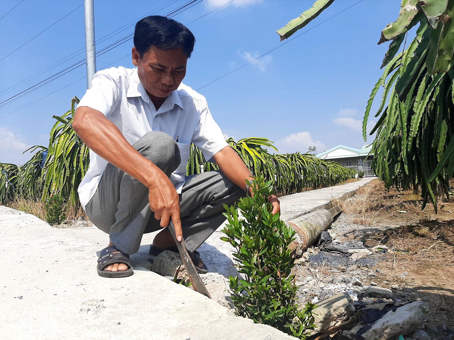 Ông Nguyễn Văn Út giặm lại cụm hoa ven đường