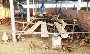 Cần Đước: Phát hiện thêm một ổ dịch cúm A H5N6
