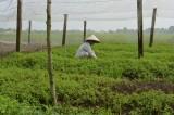 Nông dân mạnh dạn đầu tư nhà lưới trồng rau sạch