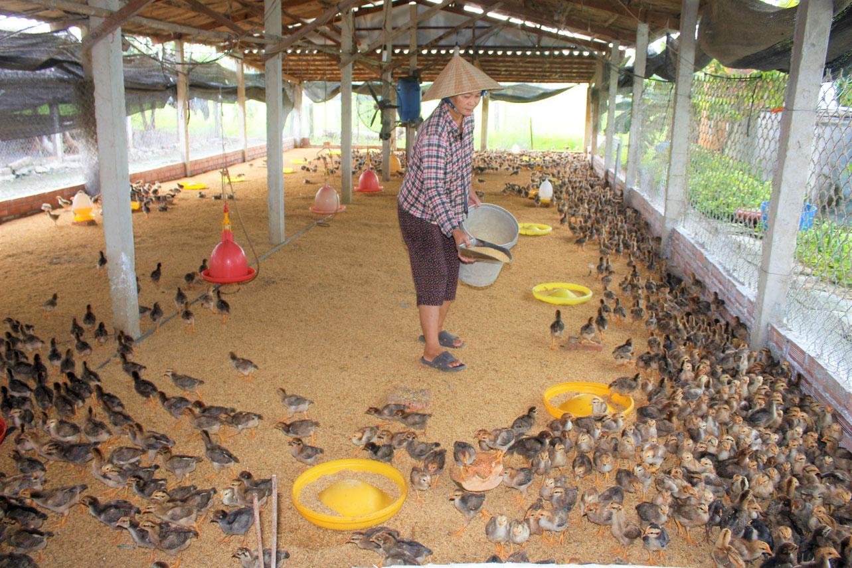 Người dân cần thường xuyên theo dõi tình trạng sức khỏe đàn vật nuôi