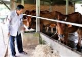Phòng, chống bệnh lở mồm long móng trên đàn gia súc