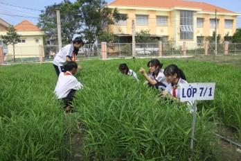 Những vườn rau trong trường học