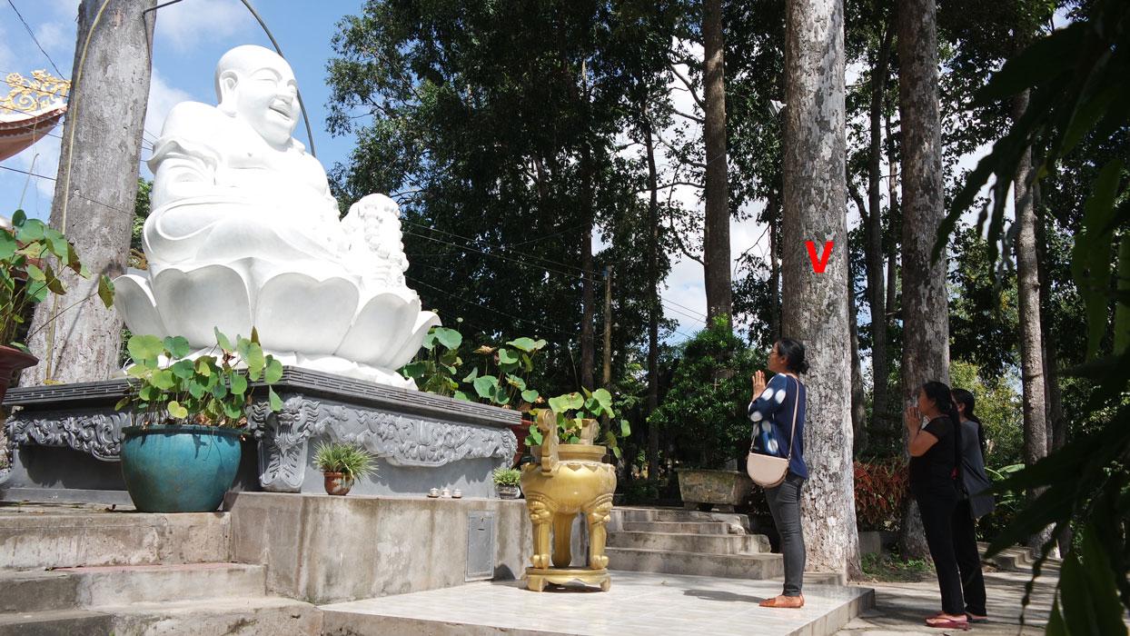 Một trong 5 cụm sao dầu (dấu V) được công nhận Cây di sản Việt Nam