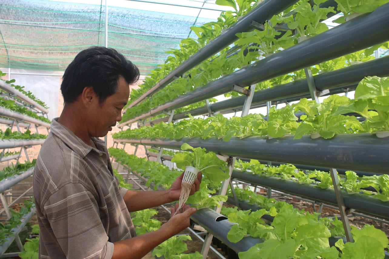 Mô hình trồng rau thủy canh của ông Chinh, góp phần mang lại sản phẩm sạch, an toàn cho gia đình và người dân xung quanh