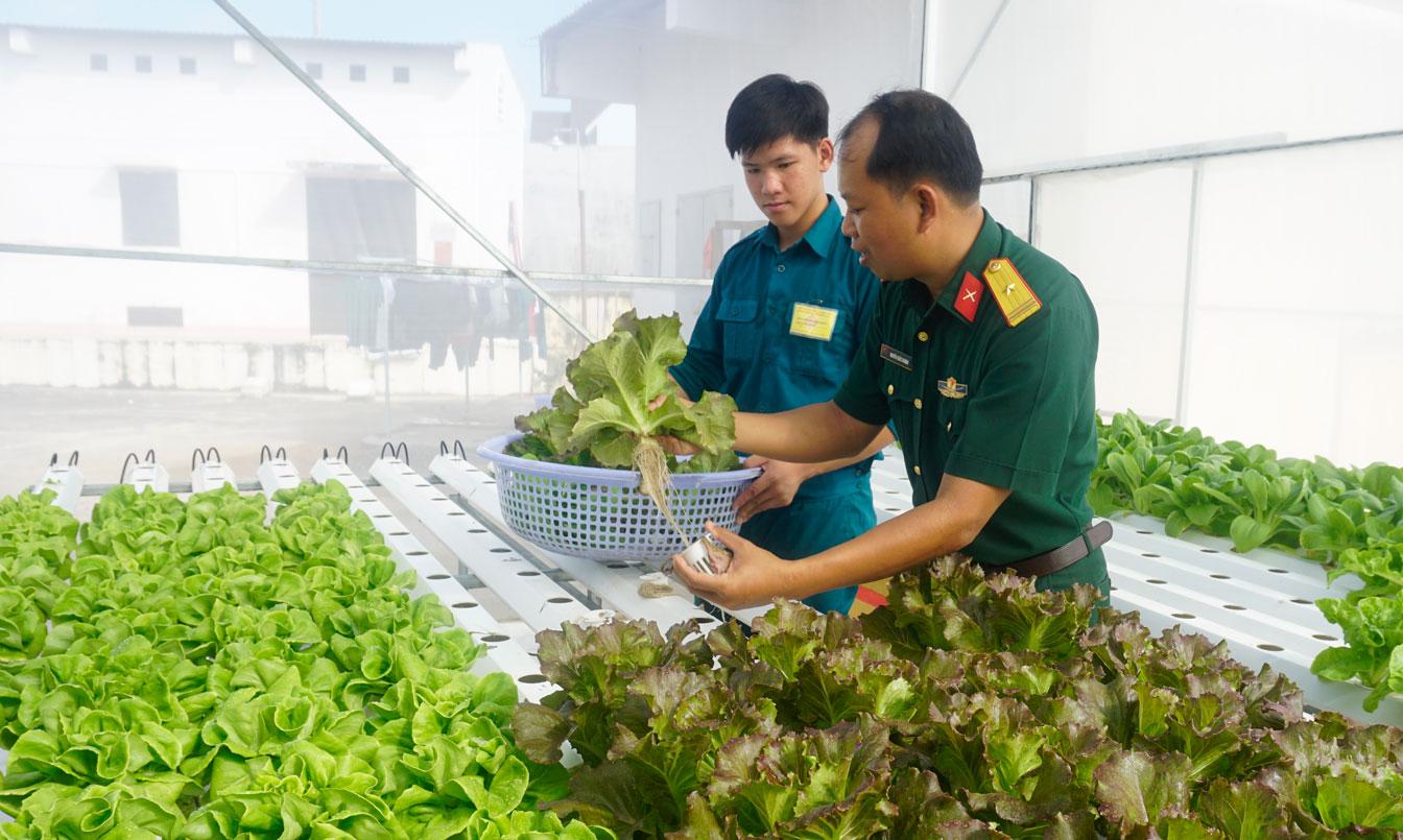 Hướng dẫn kỹ thuật trồng rau thủy canh cho chiến sĩ đơn vị