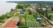 Làng hoa Chợ Lách vào Xuân