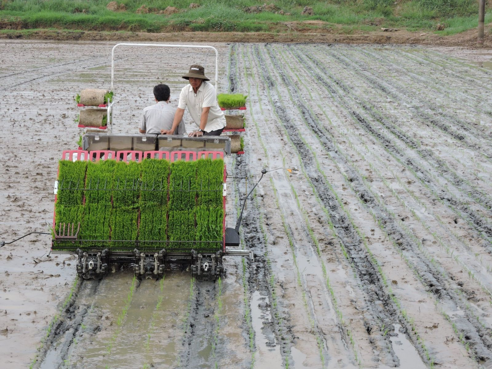 The application of high technology in agricultural production is strengthened. Photo: Song Tung
