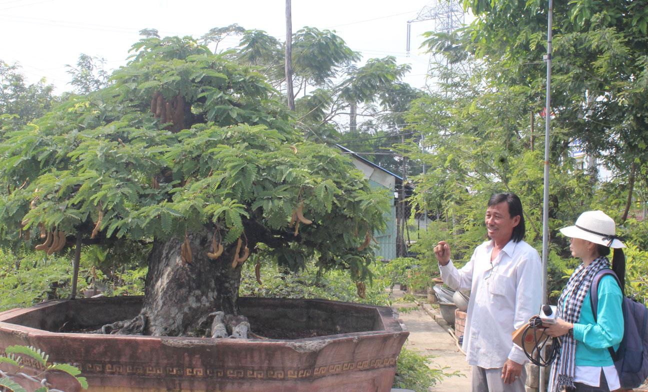 Trong vườn của ông Nam có rất nhiều tác phẩm nghệ thuật độc đáo