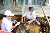 Chăn nuôi an toàn sinh học: Hướng phát triển bền vững