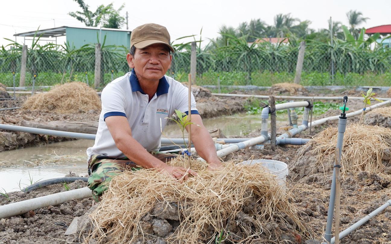 Một số nông dân huyện Châu Thành đã bỏ thanh long chuyển qua trồng loại cây khác