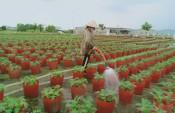 """""""Điểm hẹn"""" của nhà vườn trồng hoa tết"""