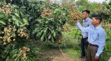 Tân Hòa: Hoàn thành các tiêu chí nông thôn mới
