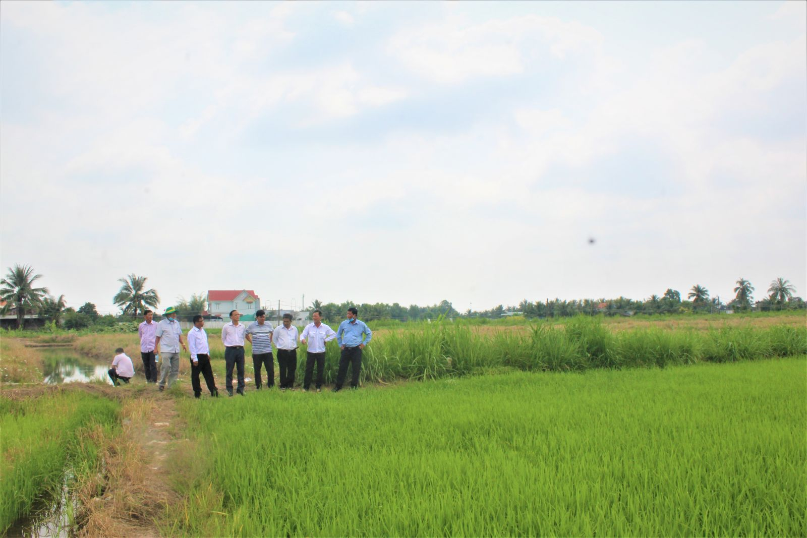 The commission examines cultivated areas for seeded rice in the third crop season out of the agricultural sector's recommendations