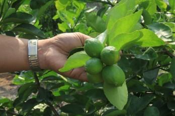 Phát triển nông nghiệp ứng dụng công nghệ cao - Hướng đi mới cho nông dân