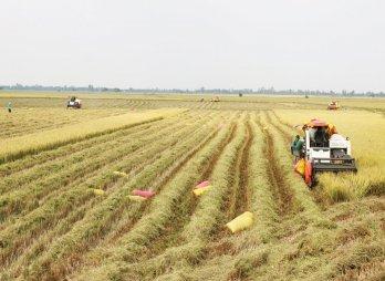 Long An: Nông dân phấn khởi bước vào thu hoạch lúa Đông Xuân 2020 - 2021