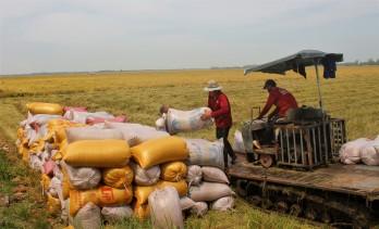 Vụ Đông Xuân 2020-2021: Trúng mùa, được giá, nông dân phấn khởi